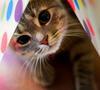 Peeking in to say Hi :)