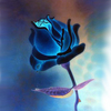 blue rose of my dreams