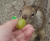 a tasty green grape.