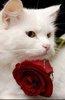 u r my special pet