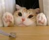*Peeking*
