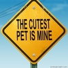 The cutest pet is mine