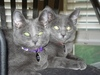 Donation to Warwicks Cat Shelter