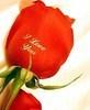 Rose for Precious U ~~