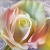 ♥ Rose for You