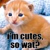 i'm cutes,so wat?