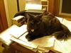 Kitten!... Ruler of the World...